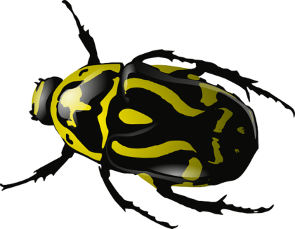 cool beetle from https://pixabay.com/en/bug-insect-beetle-wasp-yellow-34375/